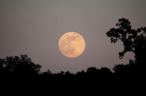 Full Moon Mantra Yoga Meditation School - Rishikesh